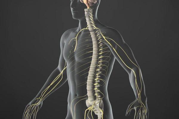 Chiropracteur ou ostéopathe ? Qui choisir et quelle différence ?