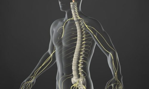 Colonne vertébrale et irritation nerveuse