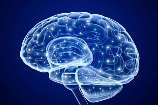 Comment le mode de vie influe sur la plasticité du cerveau ?