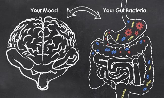 Microbiote intestinal, cerveau et humeur