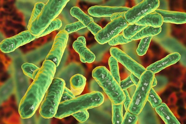 Microbiote, exercise physique et le comportement