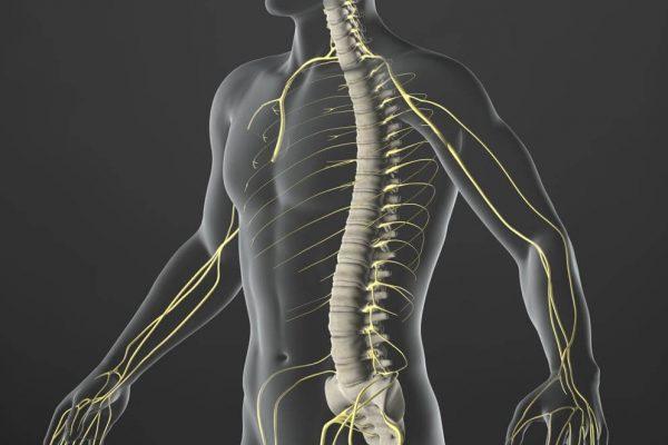 Manipulation vertébrale traite la lombalgie et modifie le cerveau